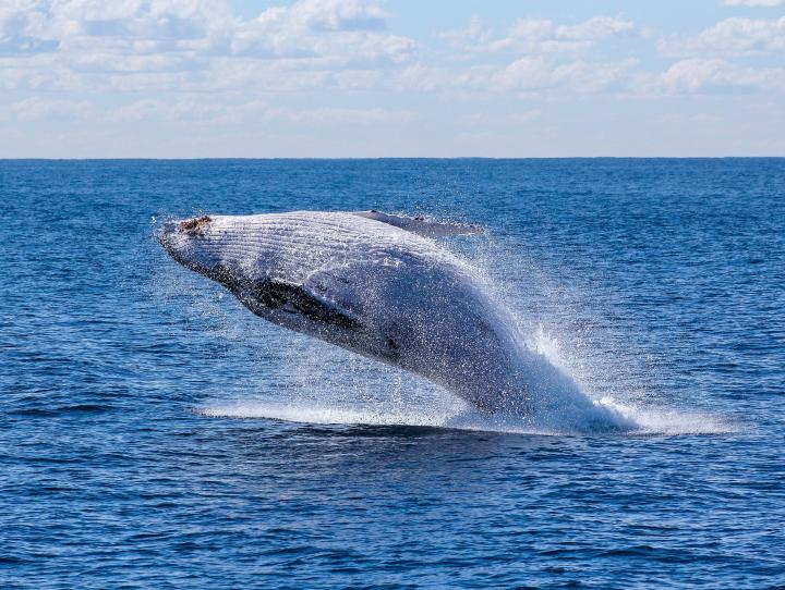 """Whaling"" email attacks: How to foil them"