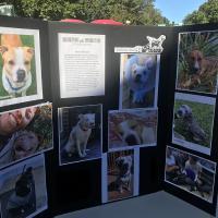 A display by PAWS Montclair Animal Shelter. DAVID DRISLANE PHOTO