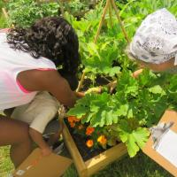 Gardening: Children visit the Cross Roads Good News Garden for a scavenger hunt to locate various vegetables in the garden. They also have a chance to harvest ripe produce and go home with planted seeds to grow. SHARON SHERIDAN HAUSMAN PHOTO