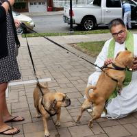The Rev. Gregory Perez fends off a dog trying to drink the Holy Water. PHIL BENSON PHOTO