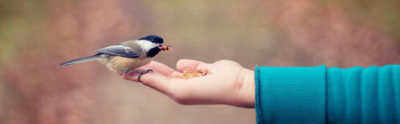 Why do spiritual gifts matter?